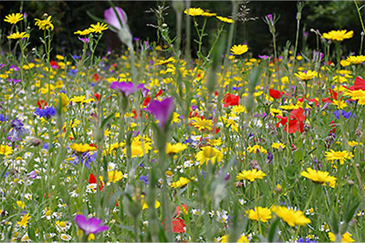 wild flowers picture